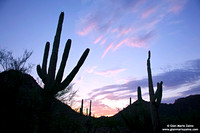 USA - Arizona, Saguaro National Park (15/08/2012)