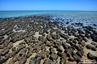 Australia - Hamelin Pool (2008)